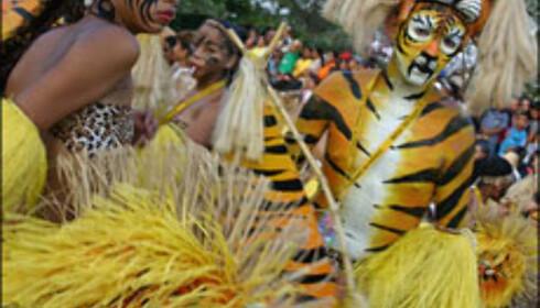 De mest autentiske paradene går ifølge lokalbefolkningen langs Calle 40 og langs Paseo Bolívar.<br /> <br /> <i>Foto: Inga Holst</i> Foto: Inga Holst