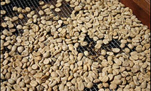 image: Kaffe - verdt en reise