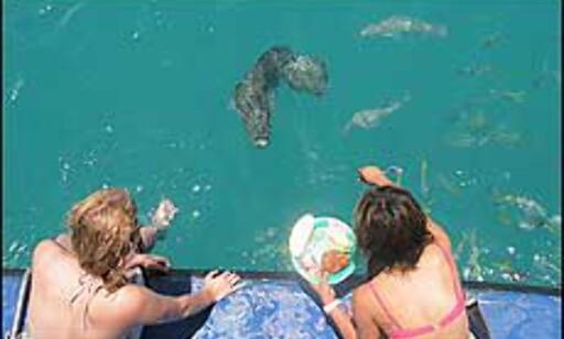 Nærkontakt med fisk på Great Barrier Reef. Foto: Sindre Storvoll