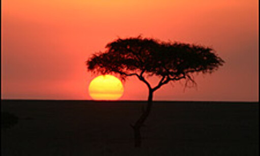 Også norske solnedganger kan være usedvanlig vakre. Likevel er det noe helt spesielt når solen forsvinner i savanne-horisonten bak et enslig akasie-tre.
