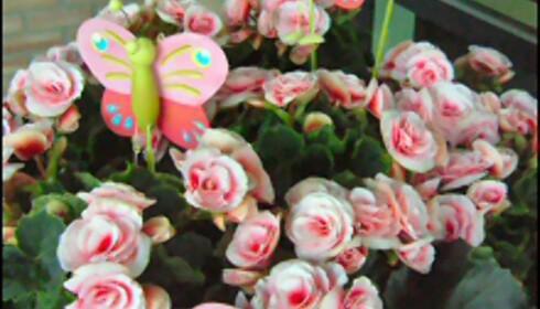 """Prikken over i-en: """"Stickers"""" i blomsterpotta. Foto: Mester Grønn. Foto: mester grønn"""