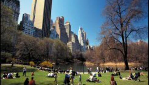Central Park er stedet å dra for å se på livet og slappe av. Foto: NYC & Company