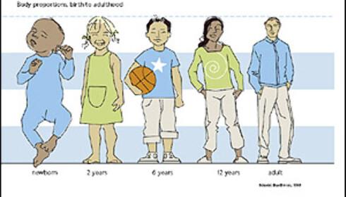 TUNGT HODE: Denne illustrasjonen fra Volvo viser kropps-proporsjonene til ulike aldersgrupper. Hos en ni måneder gammel baby utgjør hodet en firedel av den totale kroppsvekten.