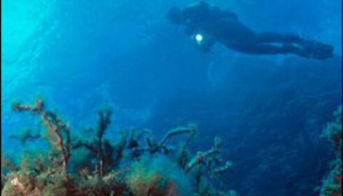 Undervannsverden rundt Malta er fantastisk. Foto: Calypso Divers