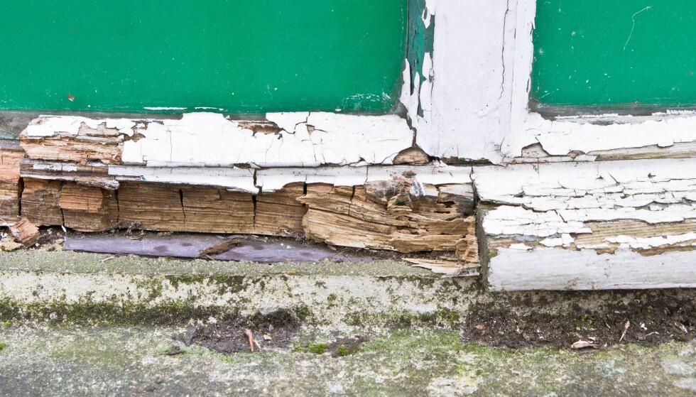 NORSKE HUSEIERE SER IKKE ETTER SOPP OG RÅTESKADER: Halvparten av norske huseiere sjekker aldri huset for sopp- og råteskader, og de under 30 er verst. Det kan bli dyrt, for sopp og råte er veldig utbredt i norske hus, ifølge skadeeksperter Dinside har snakket med. Foto: Tom Gowanlock / Shutterstock / NTB scanpix