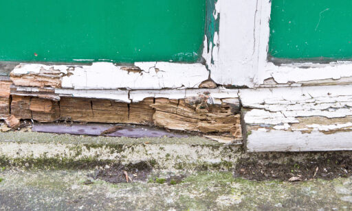 image: Halvparten av norske huseiere sjekker aldri fuktdannelser