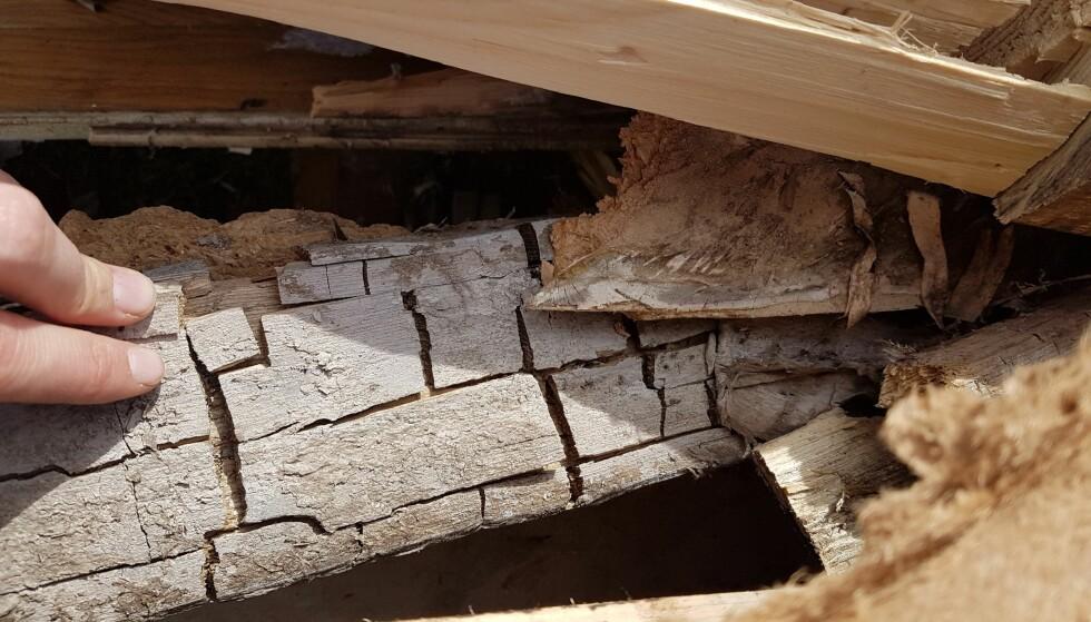 EKTE HUSSOPP: Bildet viser angrepet treverk som har krympet opp i noe som minner om terninger eller sprekkeklosser. Foto: Norsk Hussoppforsikring
