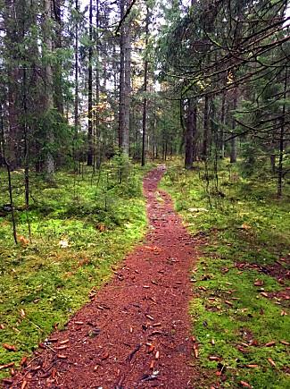 UT I SKOGEN? Vi har testet terrengskoene på stier og i skogsterreng. Foto: Kristin Sørdal