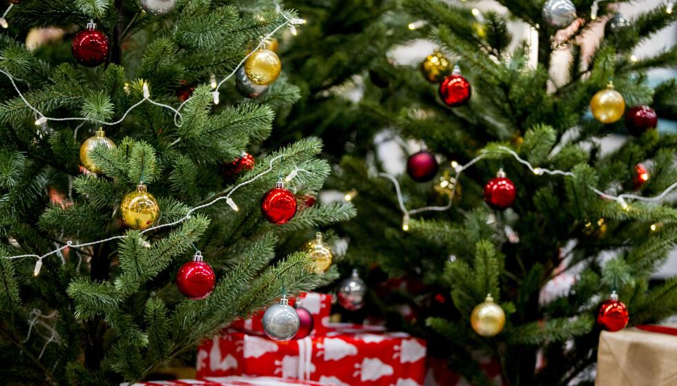GRØNT OG GLITRENDE: Juletrær kommer i mange fasonger og kvaliteter. Er du litt bevisst på kjøp og behandling, kan du ha glede av treet lenge. Foto: Vegard Wivestad Grøtt / NTB Scanpix
