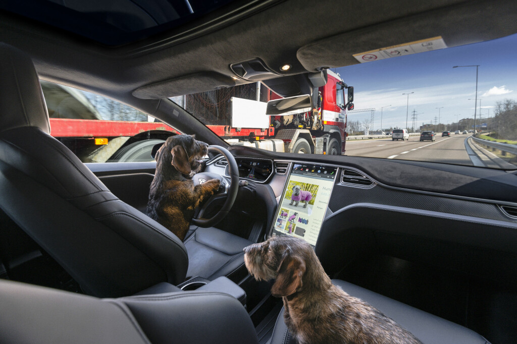 """<B>DACHSBOARD: </B>No, we are not barking mad, the future is here. The new autonomous system is """"a guide dog for the blind"""". Soon your dog could actually take you for a walk. Foto: Jamieson Pothecary / Autofil"""