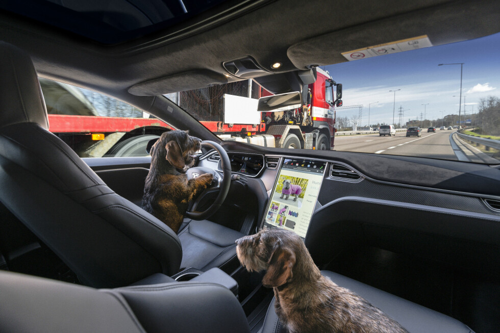 """DACHSBOARD: No, we are not barking mad, the future is here. The new autonomous system is """"a guide dog for the blind"""". Soon your dog could actually take you for a walk. Foto: Jamieson Pothecary / Autofil"""