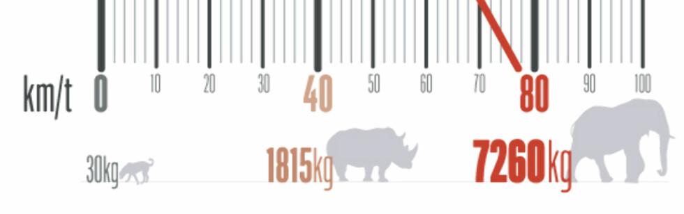 Dyr er kanskje det vi slurver mest med når det gjelder sikring. Hunder blir ofte observert løse i bagasjerommet. Vær da klar over at en gjennomsnittlig Golden Retriever veier det samme som en indisk elefant i 80 km/t...