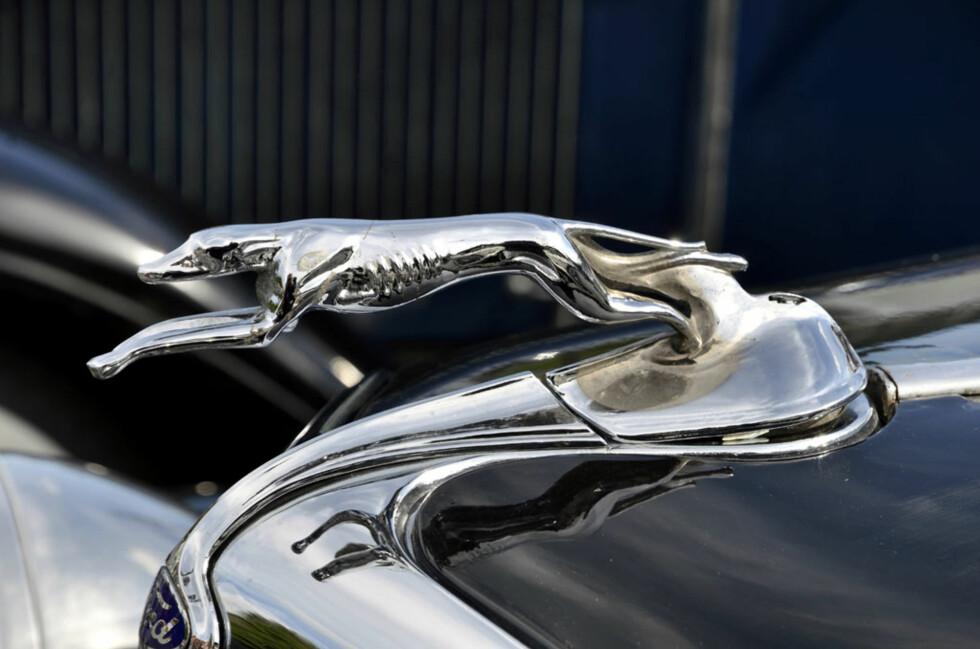 Nei, dette er faktisk ikke en Jaguar..! Et nærmere øyesyn avslører at dette slett ikke er et kattedyr, men en hund. Bilen er en 1931-modell Ford A Roadster eid av  Johnny Tyseng. Foto: Stein Inge Stølen