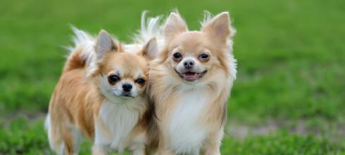 Hundene som koster mest og minst å forsikre