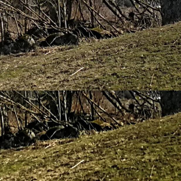 P10 Plus (nederst) har mer farger, men svakere detaljer i bildene sammenlignet med Mate 9 Pro.