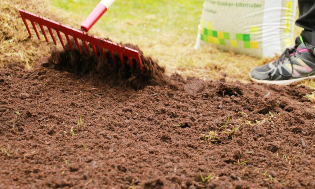 FYLL PÅ MED HAGEJORD: Er jorda under veldig hardpakket, er det smart å frese den opp først. Foto: Berit B. Njarga