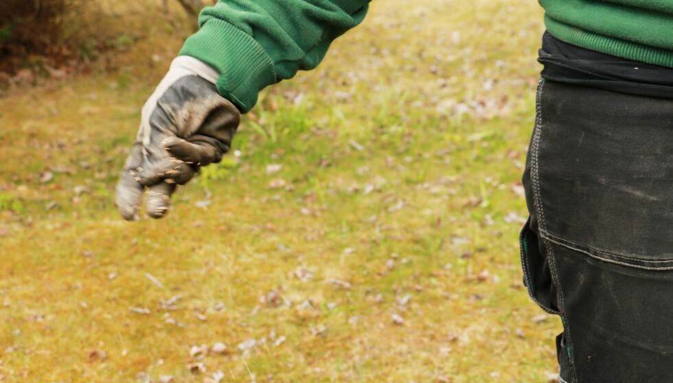 SÅ PLEN: sår du for hånd, bør du passe på å gjøre det i to retninger. Foto: Berit B. Njarga