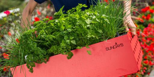 image: Så enkelt dyrker du din egen urtehage