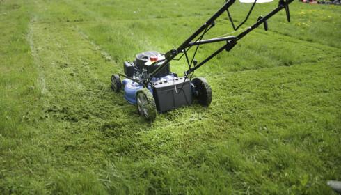GRESS: Klipperne ble testet på gress i ulike høyder. Foto: Øivind Lie-Jacobsen