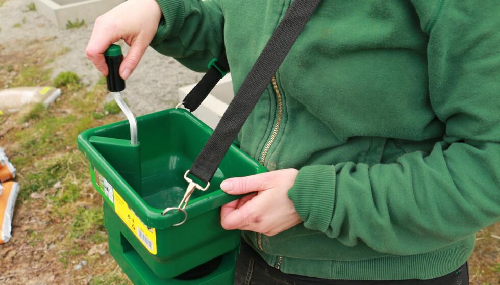 KALKE PLEN: Strø kalk direkte på plenen med hånda, eller med en håndsåer, som på bildet. Foto: Berit B. Njarga
