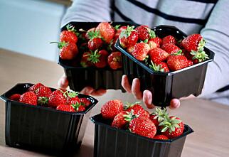 Glad i norske jordbær? Vi har sjekket pris og kvalitet i norske matbutikker