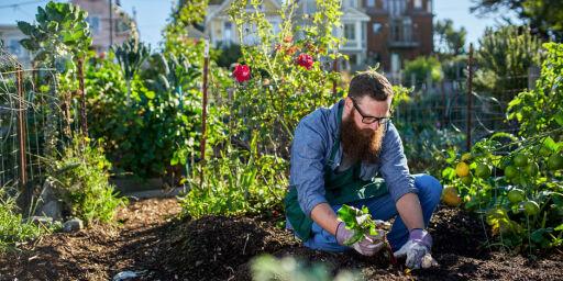 image: Nå får du den beste hagen - til halv pris