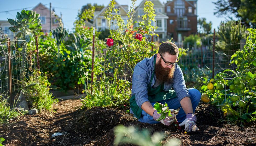 Nå får du den beste hagen - til halv pris