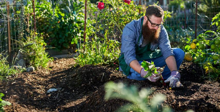 HØSTPLANTING ER BÅDE BILLIGERE OG BEDRE: Nå får du hageredskaper, hagemøbler og hageplanter til halv pris. OG høsten er en bra tid for plantene å komme i jorda. Foto: Shutterstock/NTB Scanpix