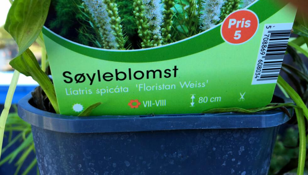 SJEKK HERDIGHETSSONE: Sjekk herdighetssonen der du bor, før du kjøper nye planter. Det skal stå på informasjonen på planten når du kjøper den. Foto: Kristin Sørdal