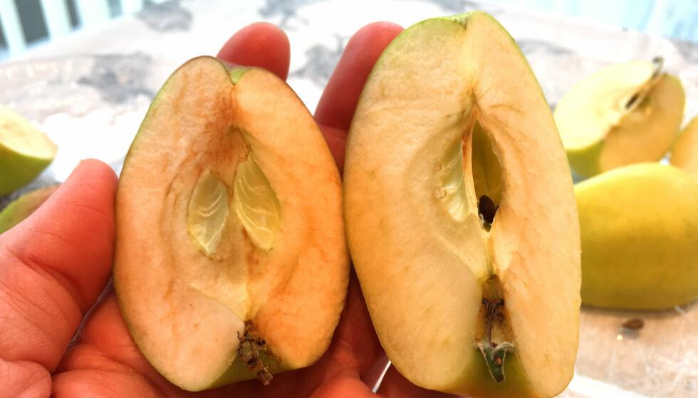 30 MINUTTER: Norsk eple til venstre, italiensk Golden Delicious til høyre. Foto: Kristin Sørdal
