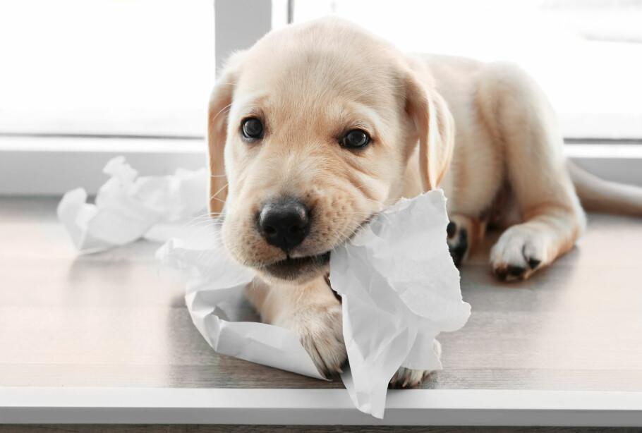 STORE FORSKJELLER PÅ DYREFORSIKRING: Norsk Familieøkonomi har sjekket priser og vilkår på forsikring på hund og katt, og avslører store forskjeller både hva gjelder pris og vilkår. Foto: Shutterstock/NTB Scanpix