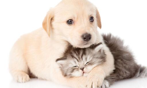 image: Her får du billigst forsikring på hunden eller katten din