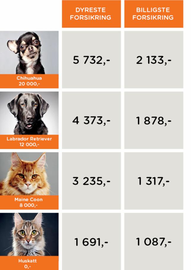 BILLIGSTE OG DYRESTE FORSIKRING: Norsk familieøkonomi har sjekket prisene på dyreforsikringer. Det er store forskjeller på pris - men også på vilkår og innhold. Foto: Norsk familieøkonomi