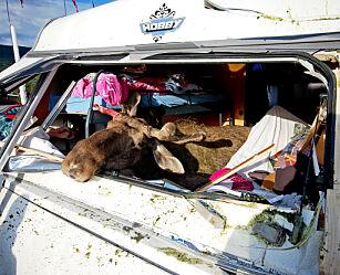 image: Her er det størst fare for å kjøre på ville dyr