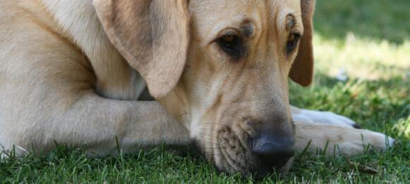 Hannhunden fikk løpetid – og matmor fikk 10.000,- tilbake