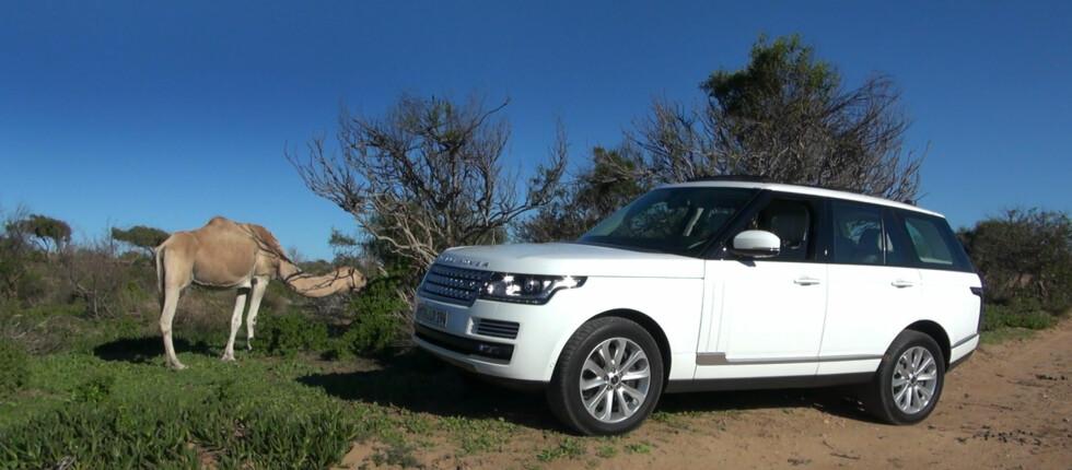 Nye Range Rover er en suveren bil på alt fra vei til mer landlige strøk. Antagelig er det også den beste off-road'eren du får rett ut av lagerhylla.  Foto: Fred Magne Skillebæk