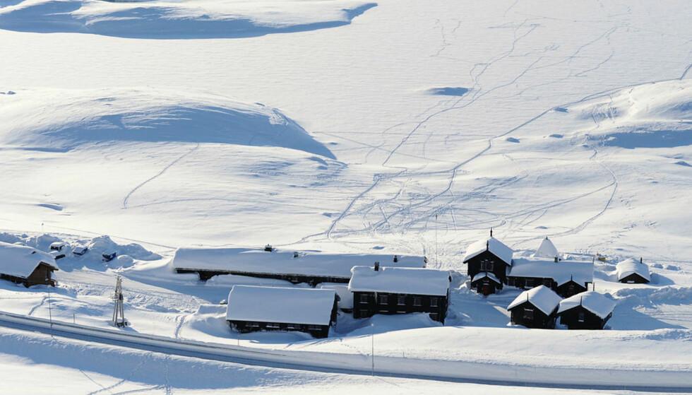 HVIT JUL: Reiser du til Haukeliseter med Turistforeningen, kan du være sikker på skiføre til jul og nyttår. Foto: Ida Sandberg.