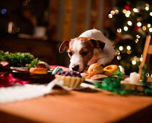 image: Pass på at dyret ditt ikke spiser dette