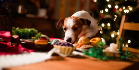 Pass på at dyret ditt ikke spiser dette