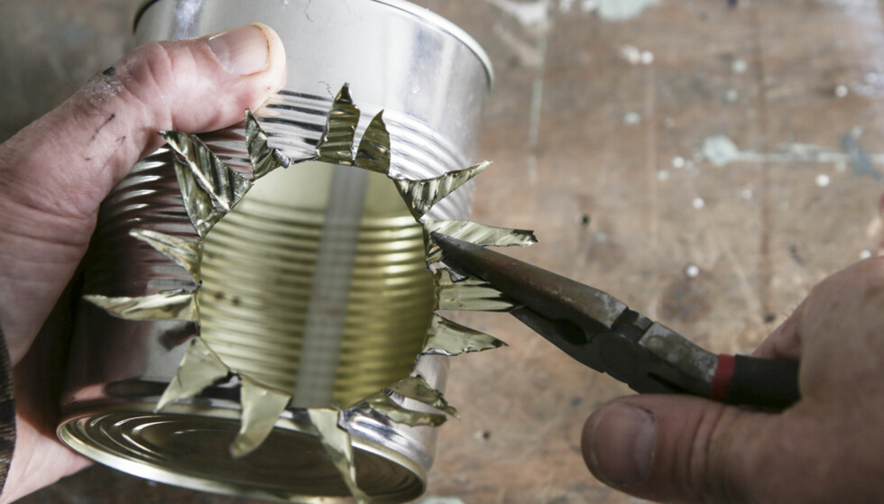 Klipp ferdig: Klipp opp ytterligere med en kraftig saks. Dra ut flikene og klipp dem av slik at de er ca. 25 mm lange. Foto: Øivind Lie-Jacobsen