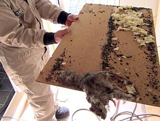 DETTE VIL DU IKKE HA I HUS: Rottekadaver og -ekskrementer over takplate. Foto: Effekta