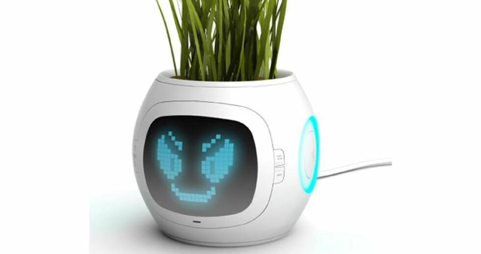 Hi-tech blomsterpotte