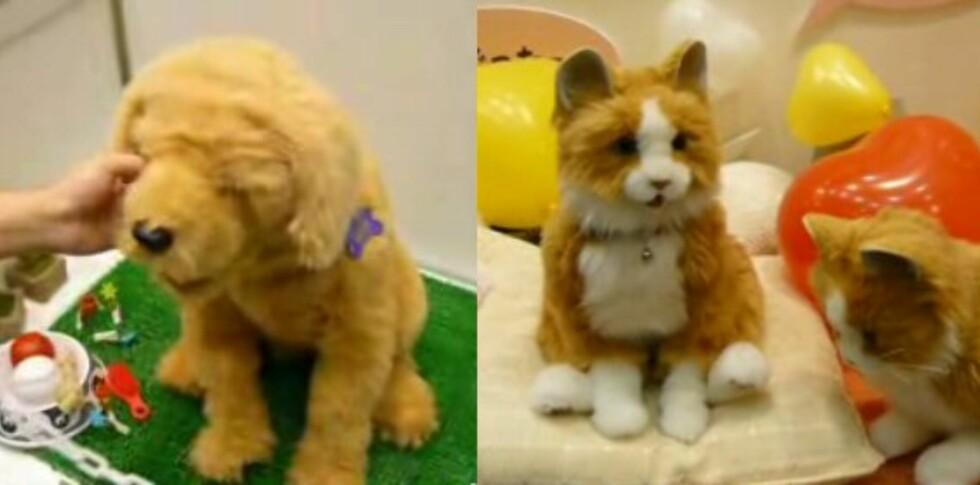 Dream Dog og Dream Cat