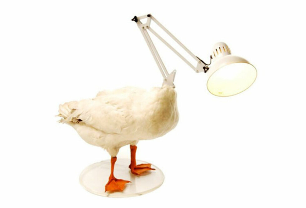 Fuglelampe for fuglehatere