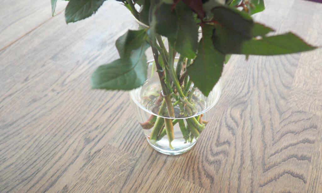 UNNGÅ BLADER I VANNET: Bladene vil forurense vannet og gjøre at blomstene visner raskere. Det samme gjør visne blomster - så napp ut de stygge før de påvirker de andre i buketten. Foto: Kristin Sørdal