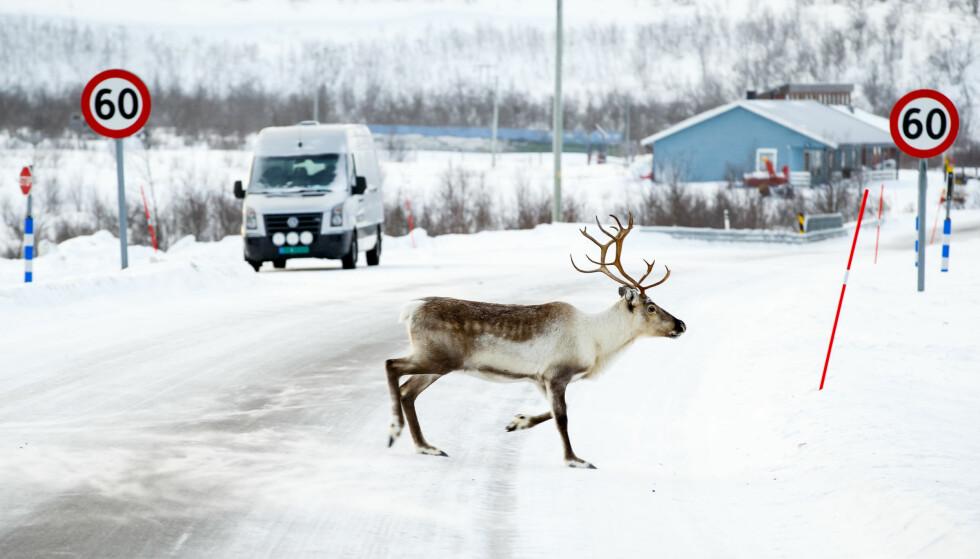 E45: Slik så det ut i Láhpoluoppal i Kautokeino på Riksvei 93 i fjor vinter. Strekningen Alta-Geađgejávri har nå fått europavei-status. Foto: NTB Scanpix
