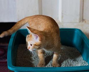 image: Slik fjerner du kattepiss-lukta