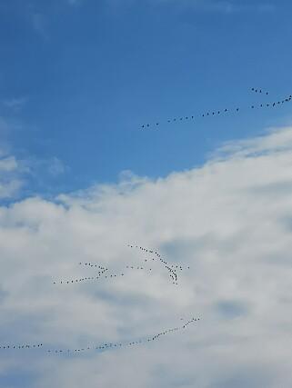 ZOOM: Med 5x hybridzoom kan du fange ting som er ganske langt unna, som disse fuglene som vi nærmest bare kunne se som prikker på himmelen. Foto: Pål Joakim Pollen