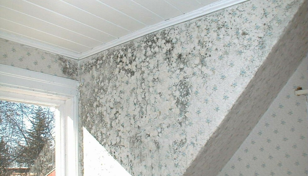 SOPPSPREDNING: Slik kan muggsopp se ut når den har fått utvikle seg fritt over lengre tid. Muggsopp oppstår ofte i eldre hus med dårlig ventilasjon. Foto: If skadeforsikring.