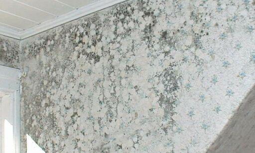 image: Slik kan du enkelt fjerne muggsopp fra veggen